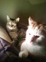 Zwei süße Hauskatzen suchen dringend neues Zuhause