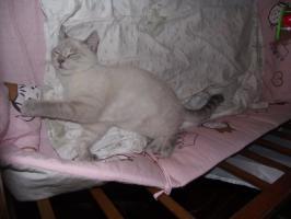 Foto 2 Zwei süße Katzenmädel suchen zu Weihnachten ein liebes Zuhause