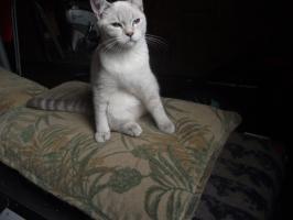 Foto 4 Zwei süße Katzenmädel suchen zu Weihnachten ein liebes Zuhause