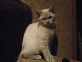 Foto 5 Zwei süße Katzenmädel suchen zu Weihnachten ein liebes Zuhause