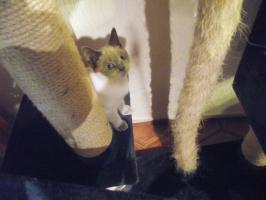 Foto 6 Zwei süße Katzenmädel suchen zu Weihnachten ein liebes Zuhause