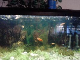 Foto 2 aquarium  200l und 40 l