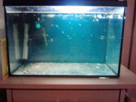 Foto 4 aquarium  200l und 40 l