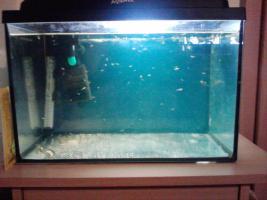 Foto 5 aquarium  200l und 40 l