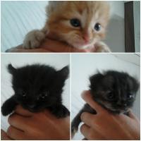 Foto 3 baby katze