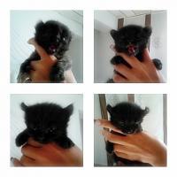 Foto 4 baby katze