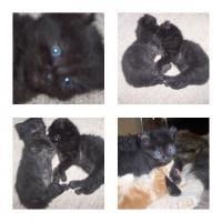 Foto 5 baby katze