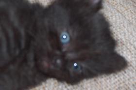 Foto 6 baby katze