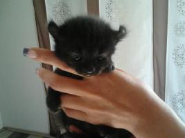 Foto 9 baby katze