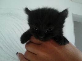Foto 14 baby katze