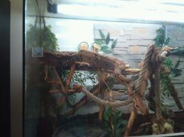 boa constrictor mit terrarium