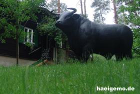 Foto 3 cow kuh lebensgroß so ne deko kuh is schon gross ….
