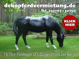 Foto 3 dekopferdvermietung.de  kennste noch nicht oh du wolltest doch ein deko pferd lebensgross mieten ???