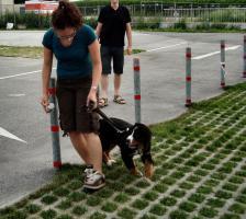 Foto 2 die kunterbunte Hundehütte, Hundeschule Kreis Steinfurt