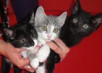 drei Kätzchen suchen neues Zuhause