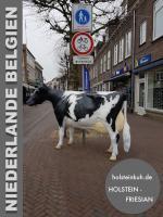 Foto 3 du möchst dir ne melkkuh kaufen so ne deko melk kuh lebensgross wo du dann mit deinen freunden auch ...