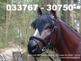 Foto 10 du willst ne Deko kuh oder Deko Pferd ja dann einfach www.dekomitpfiff.de anklicken oder Tel. 033767 - 30750