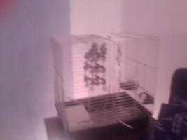 ein wellensitisch pärchen mit grossem käfig