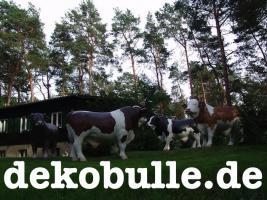 Foto 2 einen Deko Bullen für Deine Deko Kuh ...