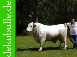 Foto 3 einen Deko Stier oder doch eine Deko Kuh oder doch ein Deko Pferd ….