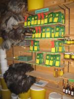 Foto 6 einheimische getrocknete Haselnüsse vom Paradiesplatz