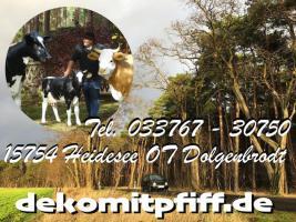 Foto 5 frag nicht immer ... sondern kauf dir ein deko pferd oder ne deko kuh oder einen deko stier lebensgroß ...