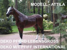 Foto 4 für ei tag mal ein deko Pferd mieten geht dass ??
