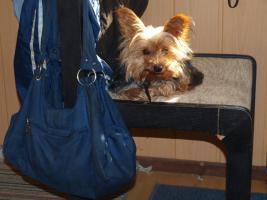 gebe ab mitte februar 5 kleine mischlingshunde ab.