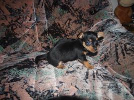 Foto 2 gebe ab mitte februar 5 kleine mischlingshunde ab.