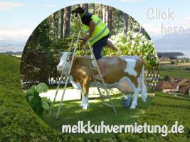 Foto 9 graz …. lebst in der stadt und schon ne deko kuh auf deinen balkon ...