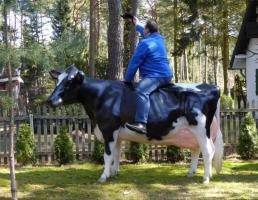 Foto 2 holstein kuh und holstein bulle jaaa bestellen jetzt ….