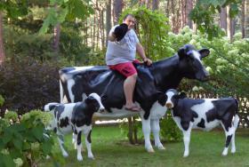 Foto 3 holstein kuh und holstein bulle jaaa bestellen jetzt ….