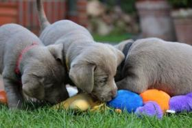 Foto 3 hunde