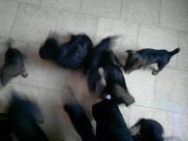 Foto 2 hunde welpen