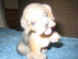 Foto 2 hundefiguren