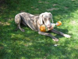 individuelle Hundeschule