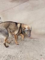 Foto 9 junge Hunde und Welpen