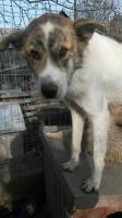 Foto 13 junge Hunde und Welpen