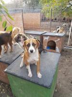 Foto 15 junge Hunde und Welpen