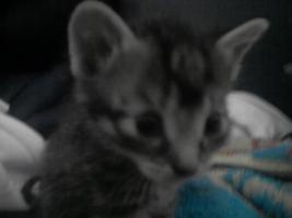 Foto 2 katzenbabys