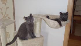 Foto 3 kitten sucht zu hause