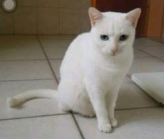 kleine weiße Katze