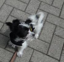kleines süßes Hundemädchen sucht ein Zuhause