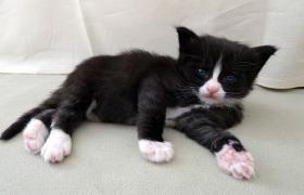 Foto 5 knuddelige Maine Coon Kitten aus getesteten Linien