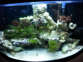 kompl. Meerwasserinhalt oder kompl. Tiere (keine Technik)