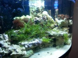 Foto 2 kompl. Meerwasserinhalt oder kompl. Tiere (keine Technik)
