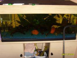 Foto 2 komplett.Aquarium mit unterschrankt fischen ca 30 (100 x40 x50 200L )