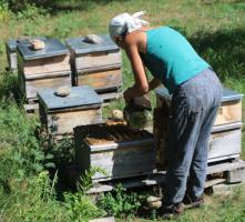 Foto 4 leckerer Bio-Sommerblüten-Honig vom Paradiesplatz