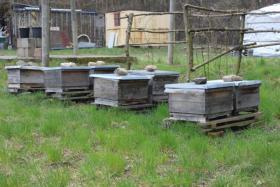 Foto 6 leckerer Bio-Sommerblüten-Honig vom Paradiesplatz
