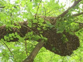 Foto 7 leckerer Bio-Sommerblüten-Honig vom Paradiesplatz